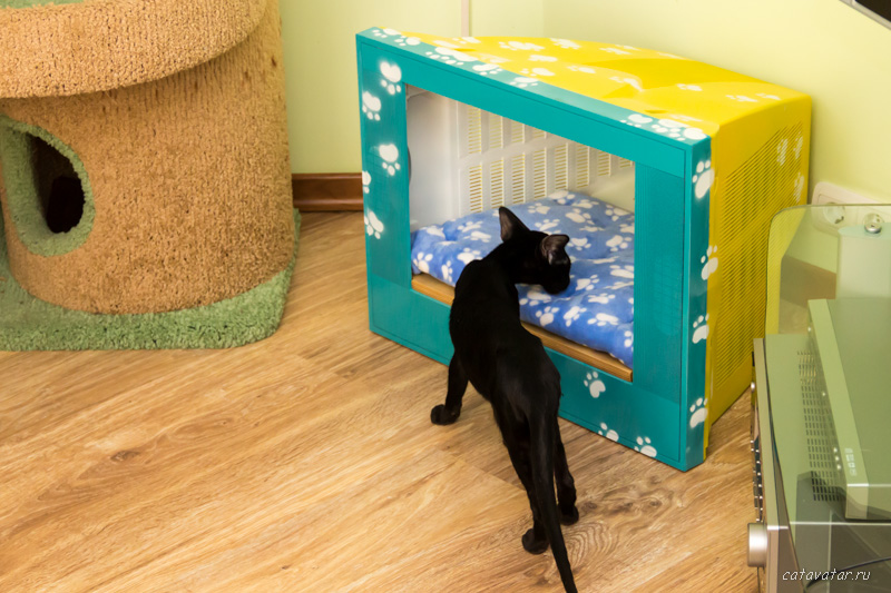 Мастерская мебели для кошек питомника Аватар