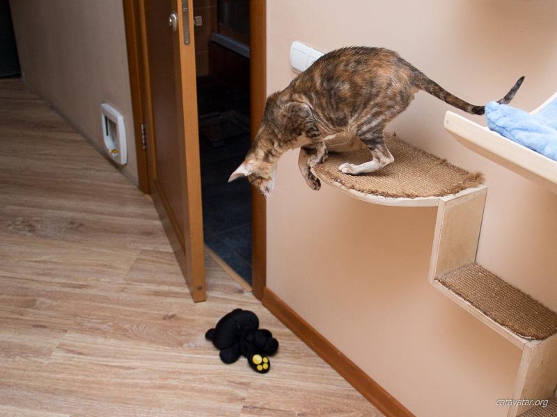 Ориентальные кошки охотятся. Питомник ориентальных кошек в Москве. Купить котёнка.Истории и фотографии о жизни кошек.