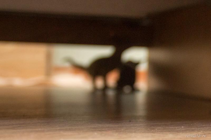 Ориентальные котята. Ориентальные кошки. Питомник ориентальных кошек в Москве. Кошачий питомник. Мебель для кошек. Рассказы о кошках.