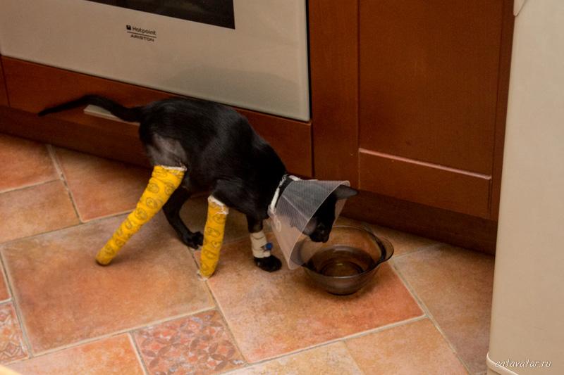 Ориентальный котёнок сломал ноги. Купить ориентального котёнка. Питомник ориентальных кошек в Москве. Дом для кота.