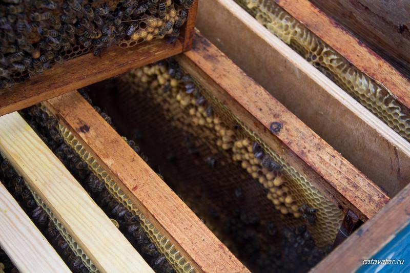 Пчеловодство для любителя. Пчёлы прилетели на дачу.