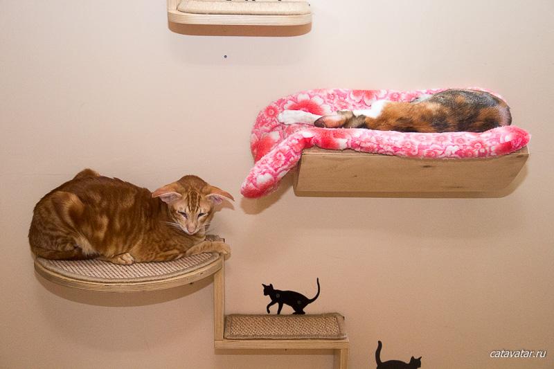 Кошачья любовь. Питомник ориентальных кошек в Москве. Купить ориентального котёнка.Ориентальные кошки. Ориентальный котёнок. Истории о кошках. Фото ориентальных кошек.