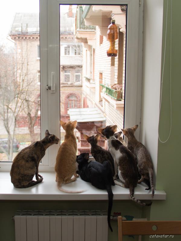 Кормушка для птиц. Телевизор для кошек. Питомник ориентальных кошек в Москве. Купить ориентального котёнка.Ориентальные кошки. Ориентальный котёнок. Истории о кошках. Фото ориентальных кошек.