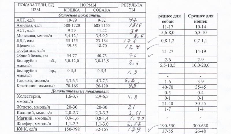 Результаты анализов собаки. Питомник ориентальных кошек в Москве. Купить котёнка.Истории и фотографии о жизни кошек.