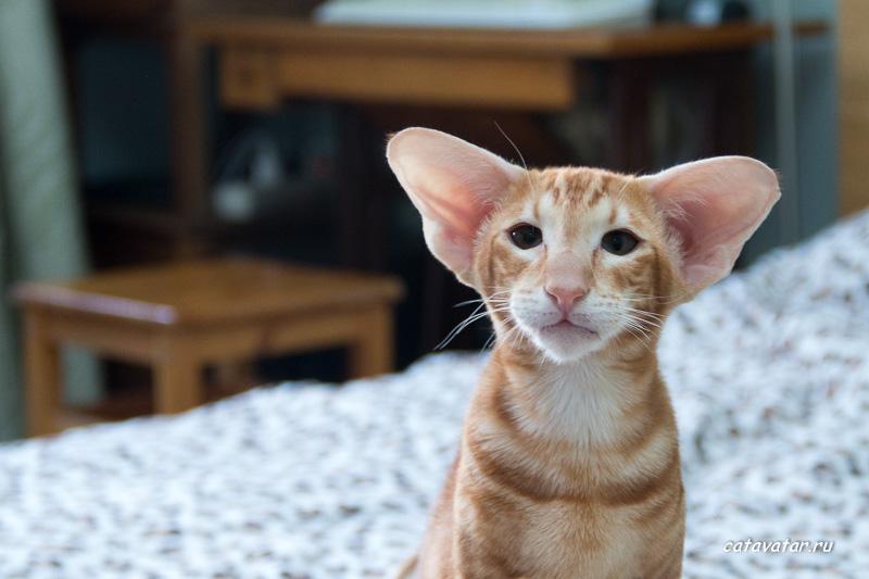 История жизни кота