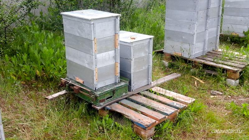 Пасека Медовый Грааль. Honey Grail. Купить мёд. Продать мёд. Продукты пчеловодства. Пчёлы.