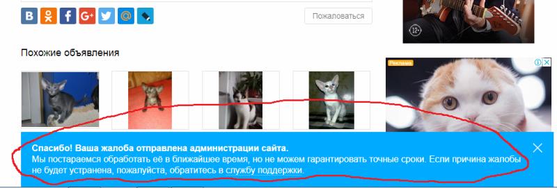 На Авито мошенники. Обман с продажей ориентальных котят.