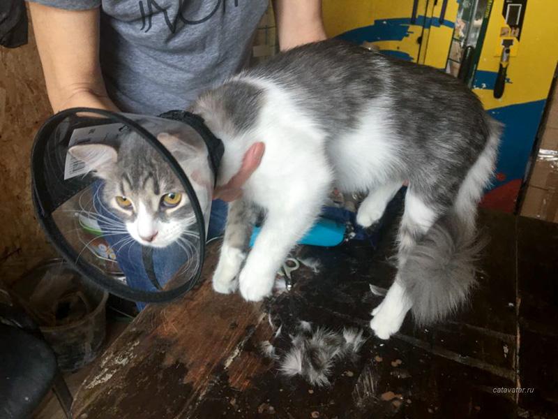 Груминг. Купить ориентального котенка. Фото ориентальных кошек. Ориентальные кошки. Ориентальные котята. Питомник ориентальных кошек в Москве. Комплексы для кошек. Кошачий комплекс. Когтеточка для кошки.