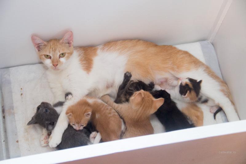 Брошенные котята, найденные котята, бездомные котята.