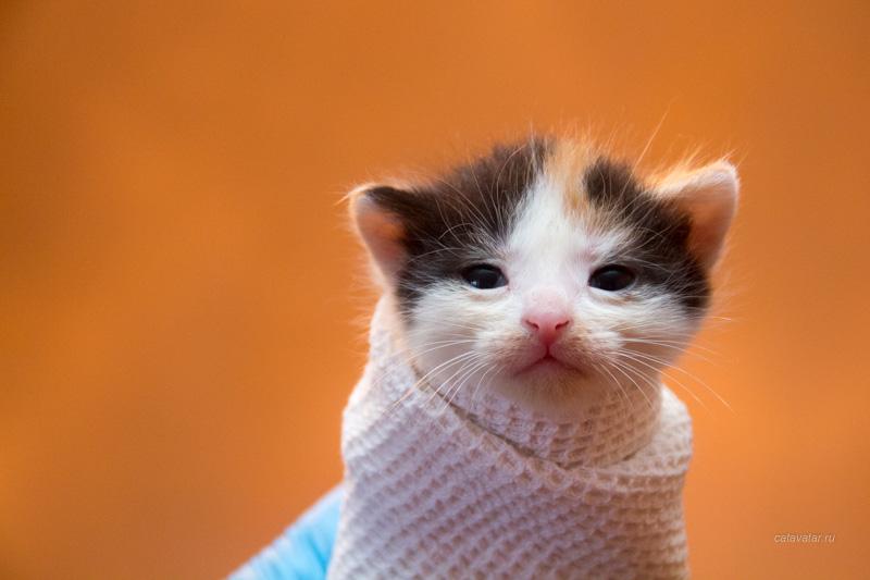 Брошенные котята, найденные котята, бездомные котята, котята в добрые руки, пристройство котят
