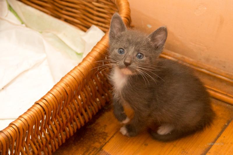 пристройство котят, брошенные котята, бездомные котята