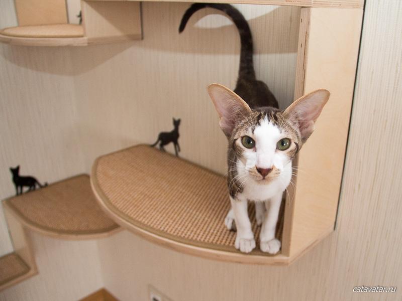 Oriental has got cats' furniture. Kitten's joy. Furniture workshop for cats CatAvatar. Furniture for cats.