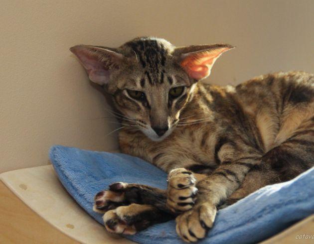 Кошечка на специальной полочке