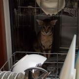 Кошачья посудомоечная машина