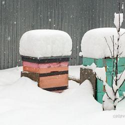 Пчёлы зимой