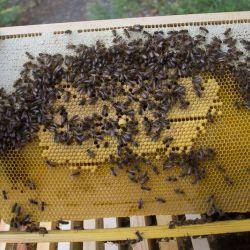 Пчёлы прилетели на садовый участок. Неопытный пчеловод. Первый улей.