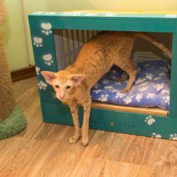 Мастерская мебели для кошек