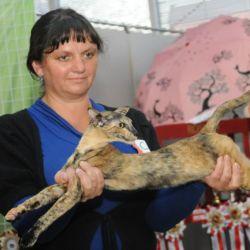Выставка кошек. Ориентальные кошки. Питомник ориентальных кошек в Москве. Ориентальные котята. Купить ориентального котёнка. Фотографии ориентальных кошек и котят.