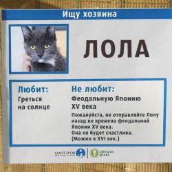 Питомник ориентальных кошек в Москве. Купить котёнка.Истории и фотографии о жизни кошек.День кошек.