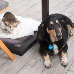 Кошки с собакой