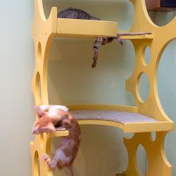 Ориентальные кошки. Купить ориентального котёнка. Питомник ориентальных кошек в Москве. Домик для кошки. Комплекс для кошек.