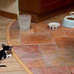 Ориентальный котёнок. Купить ориентального котёнка. Ориентальные кошки. Питомник ориентальных кошек в Москве. Рассказы истории о кошках.
