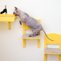 Столовая для кошки. Домик для кошки. Домик для кота. Когтеточка купить. Комплексы для кошек. Мебель для кошек.