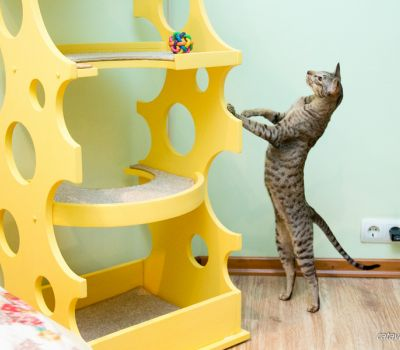 Сыр для кошек. Дом для кошки. Дом для кота. Когтеточка купить. Комплексы для кошек. Мебель для кошек.